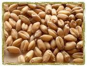 Продаем зерновые,  масленичные,  Покупаем запчасти,  СЗР,  удобрения