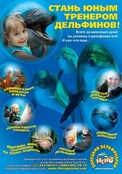 Стань юным тренером дельфинов