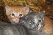 Котята ищут семью (Мариуполь)