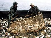 Продаем рыбу,  морепродукты. Тел.095-226-68-23.