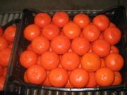 Продам цитрусовые Турция