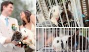 фотосессия со свадебными кроликами