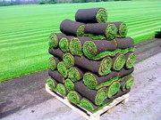 Подготовка участков к посеву газона - планировка,  засыпка черноземом,