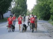 Выгул собак в Донецке и Макеевке