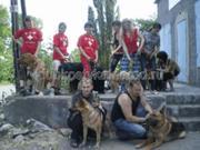 Стрижка животных в Донецке и Макеевке