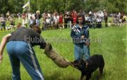 Дрессировка собак Макеевка,  Донецк и область