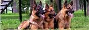 Охрана объектов служебными собаками
