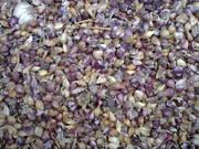 Семена чеснока ОТ 1 кг