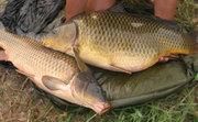 Продам живую рыбу (карп 500-700 гр.) 066-50-60-710 Донецкая обл.