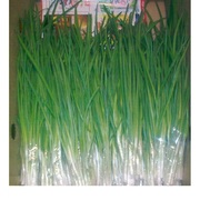 Продам зеленый лук мелким оптом
