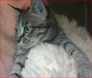 котенок-  охотница мышеловка